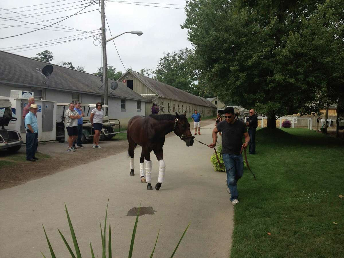 Competitive Edge, perhaps the most talked about 2-year-old on the Saratoga grounds, walks in front of trainer Todd Pletcher's barn Sunday morning. The colt won his debut here by 101/4 lengths on July 22 and will run again in the Hopeful on Labor Day, the closing day of the meet. Maybe we will see a more ballyhooed 2-year-old before the meet ends. Plenty of time left. ( Tim Wilkin / Times Union )
