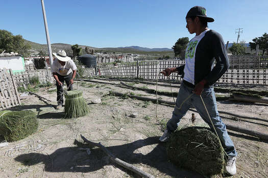 "Luis Arguello, 16, right, helps his grandfather, Miguel Arguello, 64, pack ""cortadillo,"" in Bu–uelos, Coahuila, Mexico, Tuesday, Feb. 18, 2014. The grass is harvested in the mountains surrounding the ejido and is used to make brooms. The town is located 20 miles south of Saltillo, Mexico. The state is under an almost $3 billion debt incurred by the former administration of Governor Humberto Moreira. Photo: Jerry Lara, San Antonio Express-News / ©2013 San Antonio Express-News"