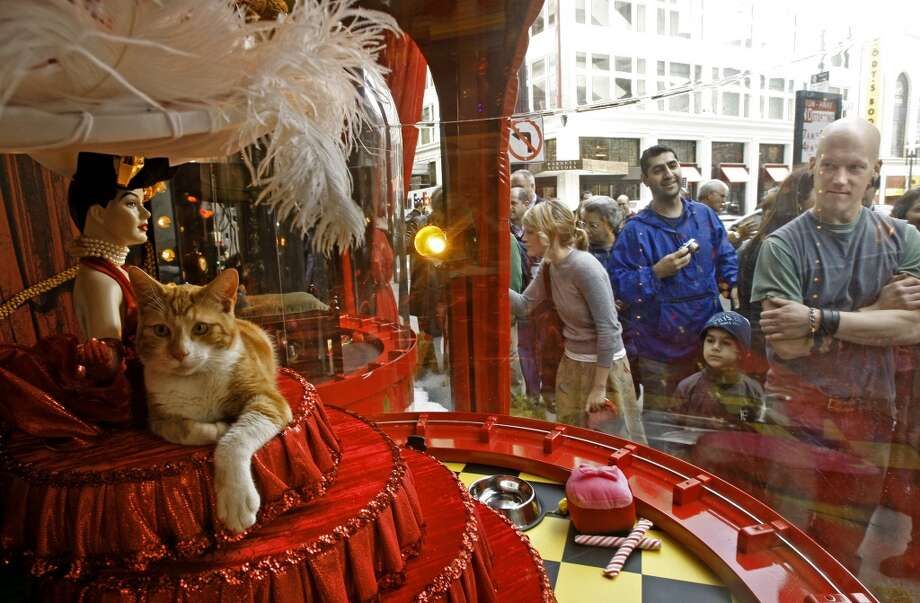 """Department stores waiting until the day after Thanksgiving to display their Christmas windows."" Submitted by 'dianef.' Pictured: The annual SPCA holiday animal adoption window at Macy's Union Square. Photo: Michael Macor, SFC"