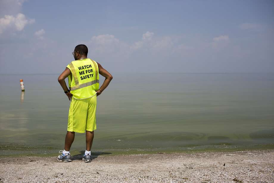 Horacio Romero of Toledo looks at algae in Lake Erie at Maumee Bay State Park in Oregon, Ohio. A drinking water ban was lifted after tests showed safer levels of the toxin microcystin. Photo: Aaron P. Bernstein, Getty Images