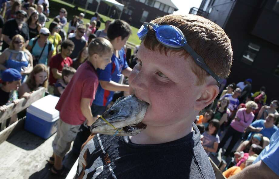 Heads, you win:The best thing about the Bobbing for Fish Heads contest at the Sitka (Alaska) Seafood 