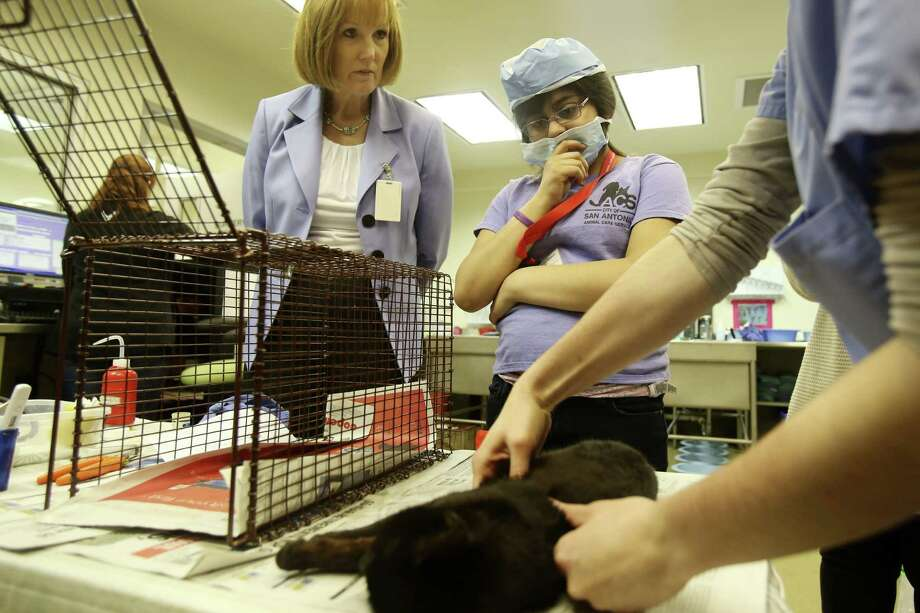 Kathy Davis, left, and Amarissa Zepeda watch as Marilyn Gotbeter describes post operation procedures for a feral cat at Animal Care Services. Photo: San Antonio Express-News / ©2013 San Antonio Express-News