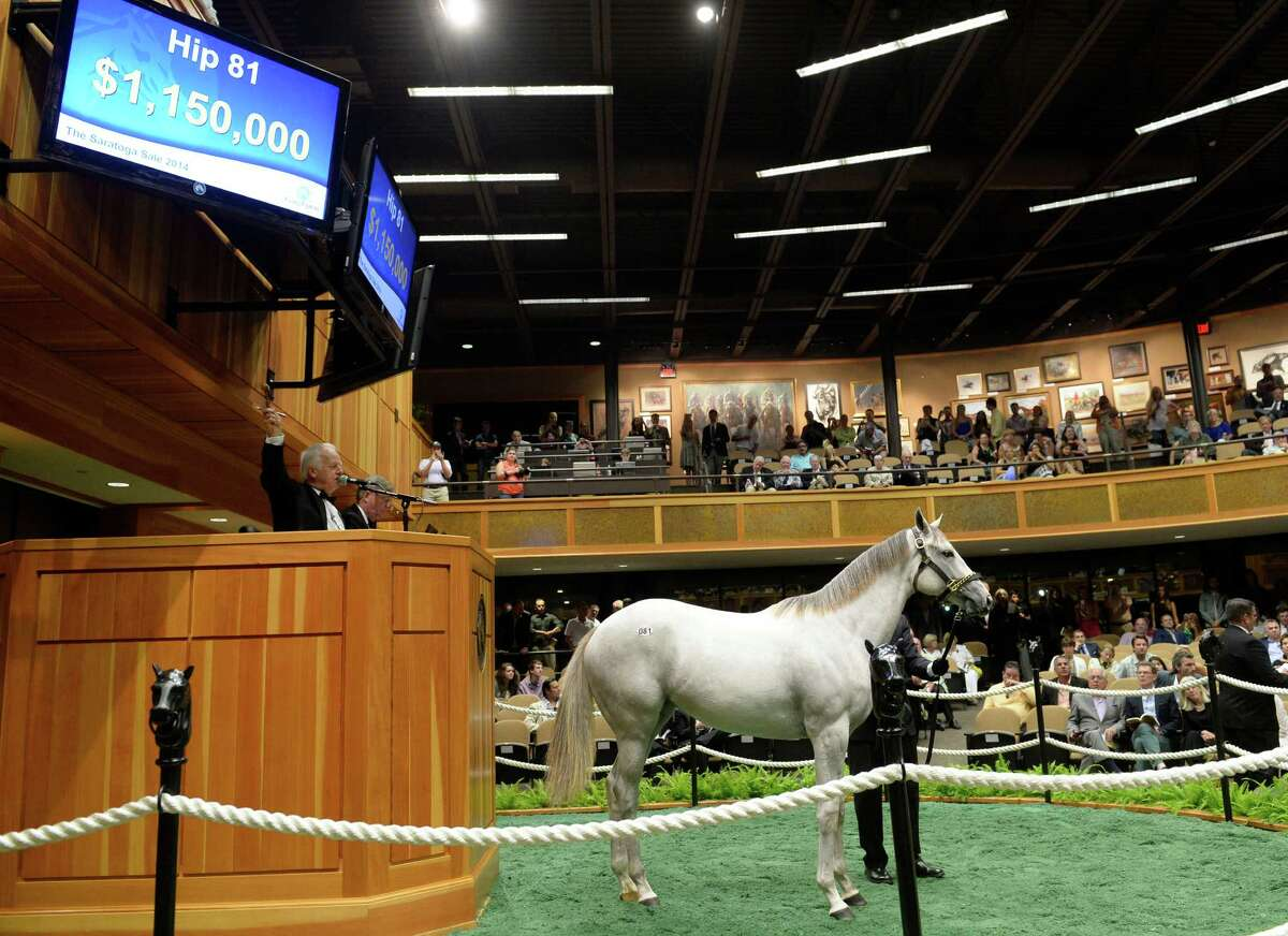Hip #81, a grey filly sired by Tapit sold for $1,150,000 at the yearling auctions held at the Fasig-Tipton sales pavilion Monday evening Aug. 5, 2014 in Saratoga Springs, N.Y. (Skip Dickstein/Times Union)