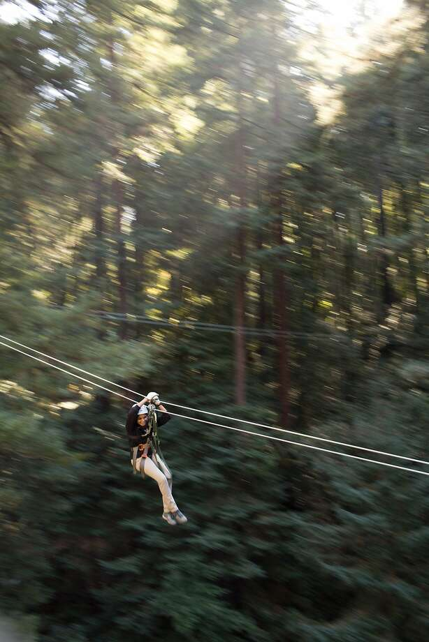 A customer zip-lines amid giant redwood trees at Redwood Canopy tours, which has six zip lines and two bridges suspended as high as 150 feet, in Mount Hermon, Calif., Saturday October 9, 2013. Photo: Jason Henry, Special To The Chronicle