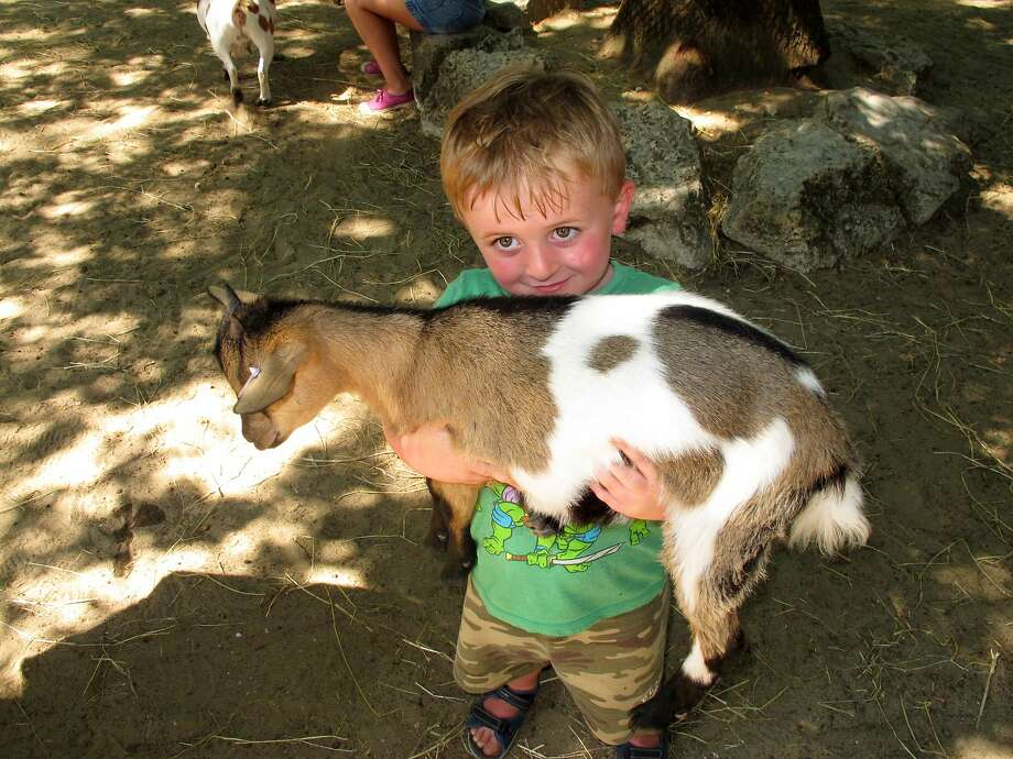They said they don't need this one anymore, Mom:Four-year-old Harry Noble carries a baby goat at La Palmyre Zoo in Led Mathes, France. The zoo permits visitors to feed many of animals, including giraffes, zebras and ostriches, and kids can pet the goats. Photo: Shawn Pogatchnik, Associated Press