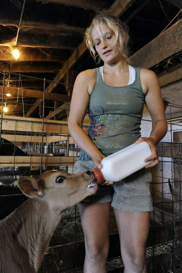 Half-gallon down the hatch: Felice Martin feeds a 2-day-old calf milk from his mother at her family's Nature View Farm in Bridgewater, Conn. Felice and her sister, Cheyanne, helped with the birth. Photo: Carol Kaliff, Connecticut Post