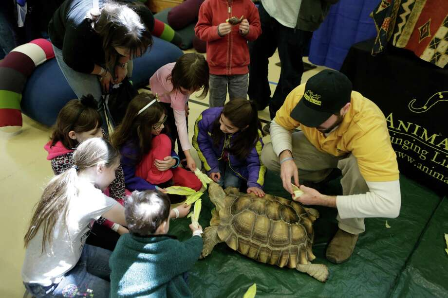 """Kidologie Goes Back to School"" will be presented Sunday, Aug. 17, at the Westfield Trumbull mall, designed to help families connect with child-friendly businesses and services, sponsored by Yale-New Haven Children's Hospital.  Above, children feed a tortoise at last year's event. Photo: Contributed Photo / Connecticut Post Contributed"
