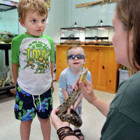 Four-year-old Rushton Trombley, left, of Wilton, and his brother Devlin, 2, are shown an injured adult female eastern hognose snake by park educator Rebecca Mullins  at the Moreau Lake State Park nature center Friday August 1, 2014, in Gansevoort, NY.   (John Carl D'Annibale / Times Union) Photo: John Carl D'Annibale / 00028006A