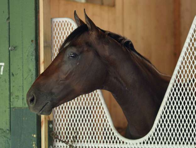 Jess's Dream who is the offering of two Horse's of the Year, the sire Curlin and his mom Rachel Alexandra stands in his stall at the McLaughlin Stables Wednesday Aug. 6, 2014 at the Saratoga Race Course in Saratoga Springs, New York.    (Skip Dickstein/Times Union) Photo: SKIP DICKSTEIN