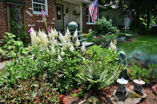 White Astilbe in Tony and Judy Eastwood's front yard garden Wednesday July 2, 2014, at their home in Saratoga Springs, NY.  (John Carl D'Annibale / Times Union) Photo: John Carl D'Annibale / 00027577A