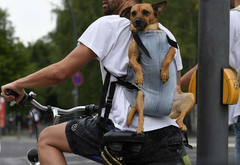 Recycled jeans: Among the uses for old dungarees, add pooch papoose. (Backpacking cyclist, Berlin.) Photo: Tobias Schwarz, AFP/Getty Images