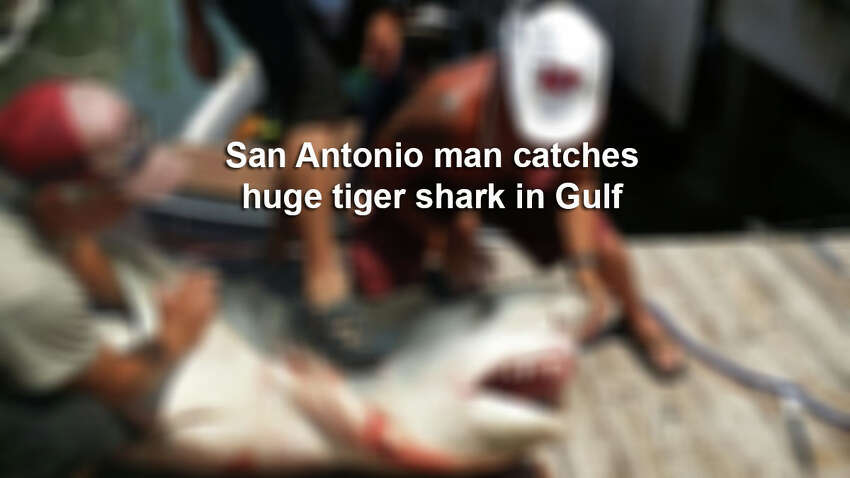San Antonio man catches huge shark in Gulf of Mexico.