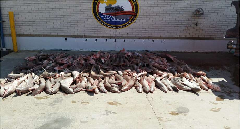 U.S. Coast Guard seized 153 sharks from Mexican poachers on August 3, 2014. Photo: Courtesy,  U.S. Coast Guard