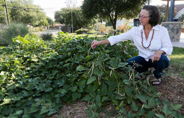 Sow, Grow, Savor: Olmos Park Terrace Community Garden