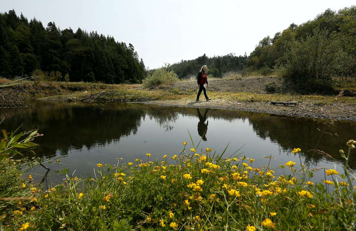 Landowner Margaret Perry walks along the South Fork of the Ten Mile River which runs through her property, as seen on Wed. Aug. 6, 2014. Along with her sister Susan Smith the two have reached an easement agreement with The Nature Conservancy to begin a restoration project and protect 872 acres of their land, near Fort Bragg, Calif.