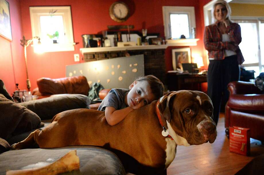 Berke McKearn, 3, hugs Tyson while his aunt Lindsay McKearn watches, at their home in Schenectady, N.Y. on Thursday, Aug. 7, 2014. Owner Sean McKearn, Lindsay's brother, and his family were forced to surrender Tyson and their other dog, Vick, or face jail time after the dogs allegedly attacked a smaller one. (AP Photo/The Daily Gazette, Patrick Dodson)  TROY, SCHENECTADY; SARATOGA SPRINGS; ALBANY AND AMSTERDAM OUT Photo: Patrick Dodson, Associated Press