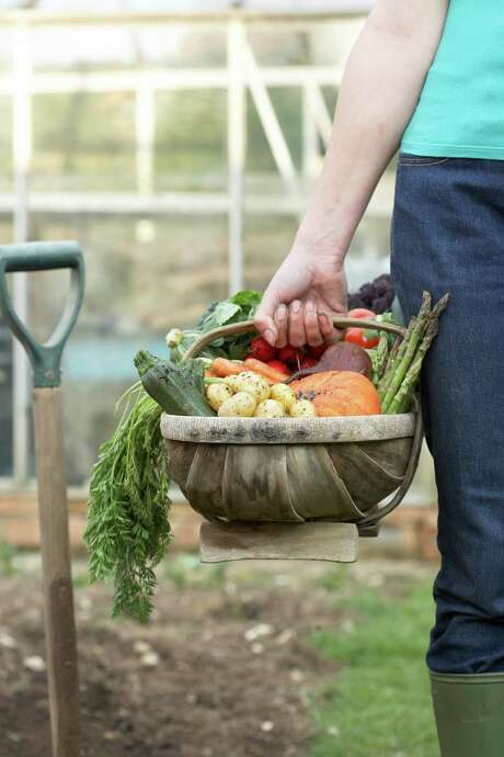 August is  the time to plan and start planting a fall vegetable garden. Martin Poole/Getty Images Photo: Martin Poole / Digital Vision