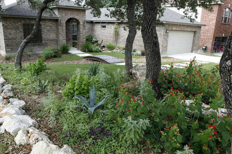 A tree-shaded bed filled with drought-tolerant plants replaced grass in the Hoppes' front yard. Photo: Photos By Cynthia Esparza / For The Express-News / For the San Antonio Express-News