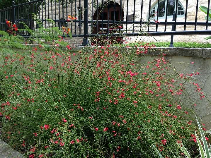shade tolerant plants for the saws fall 2014 watersaver landscape cou