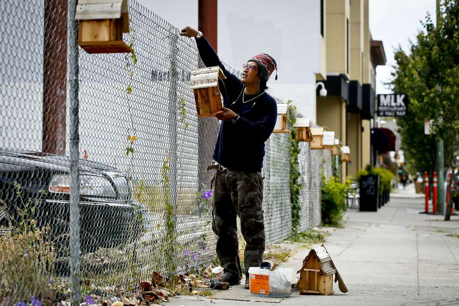 Michael Parayno replaces a stolen birdhouse that he installed on a fence along Martin Luther King Jr. Boulevard in Oakland. Photo: Russell Yip, The Chronicle