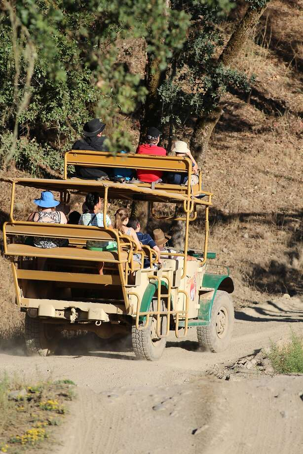 Visitors at Safari West can marvel at all the exotic animals while touring the 400-acre property in rugged trucks equipped with seats for riding on top. Photo: Spud Hilton, The Chronicle