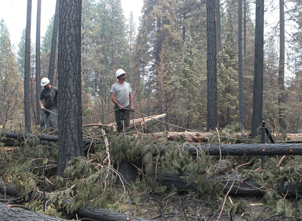 Davey Tree worker Tru Neithercutt, left, and foreman Robby Brooks clear out damaged trees Wednesday, Aug. 6, 2014, off Highway 89 in Hat Creek in the Eiler Fire burn area. The fire that so far has charred more than 31,000 acres was 35 percent contained Wednesday.