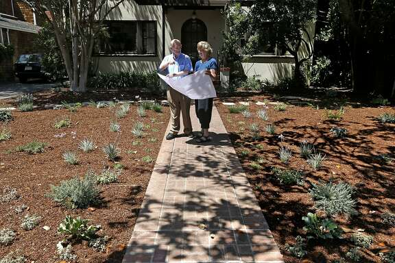 Alan and Fran Bennett, on Saturday Aug. 9, 2014, took out their lawn a week ago and had water tolerant bushes, plants and trees put in at their home  in Palo Alto, Calif., by a landscape company.  Water utilities throughout the Bay Area are beginning to offer rebates to homeowners who replace their water wasting landscape with plants and scrubs that are drought tolerant.