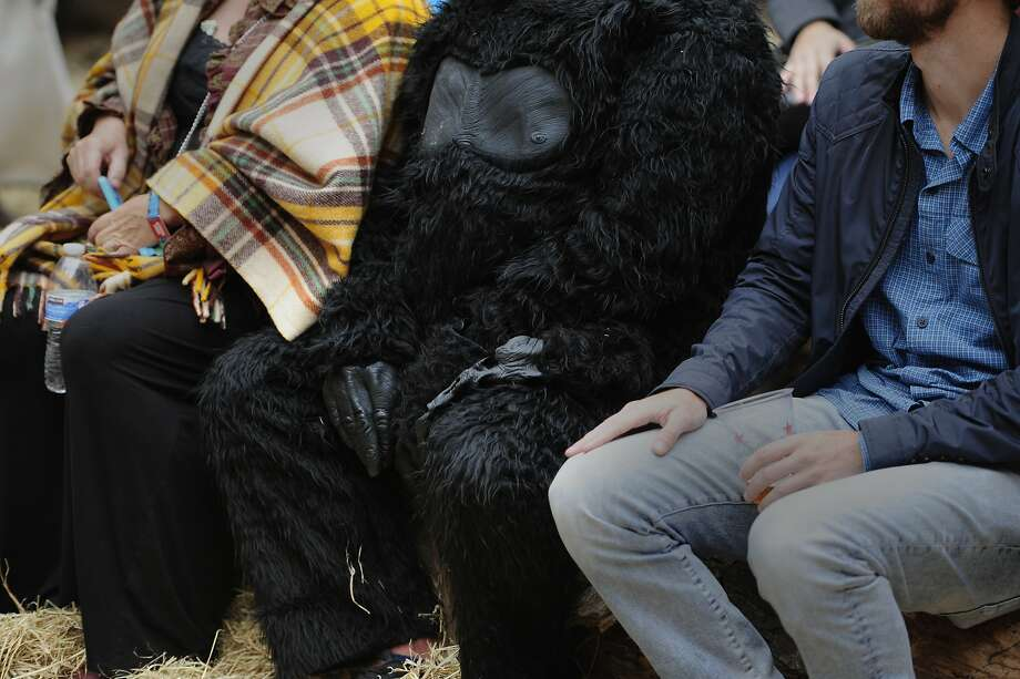 A man wears a gorilla suit at the Outside Lands Music Festival in Golden Gate Park on August 09, 2014 in San Francisco, CA. Photo: Craig Hudson, The Chronicle