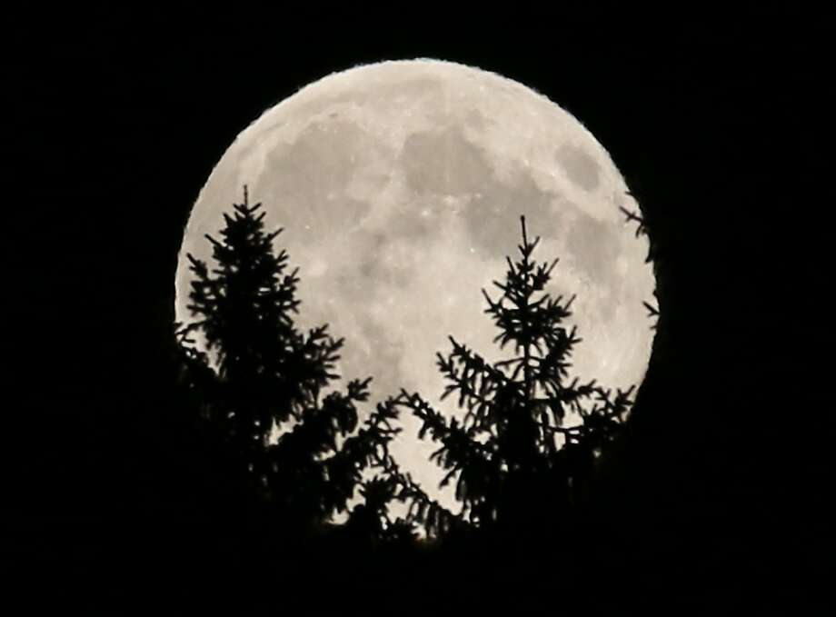 "The full moon peeks through trees in a wood near Rasing, Austria. The phenomenon, which scientists call a ""perigee moon,"" occurs when the moon is near the horizon and appears larger and brighter than other full moons. (AP Photo/Ronald Zak) Photo: Ronald Zak, Associated Press"