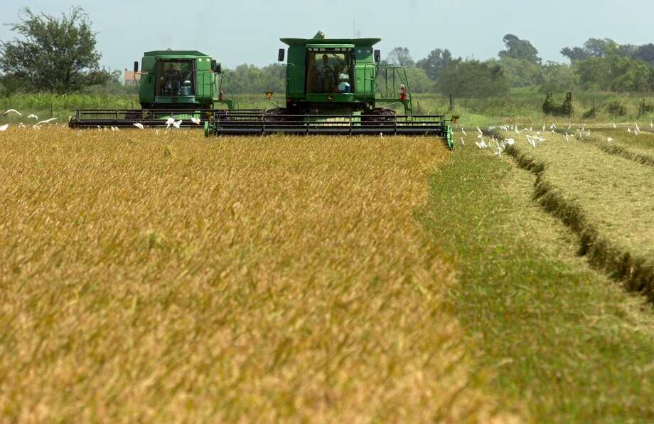 John Nolte (left) and Mike Blanchard (right) operate combines on an organic rice field at the Doguet Rice Farm in China on Friday, Sept. 14, 2007. Farmers faced a tough year after extensive rains during planting season and now have been hit by Hurricane Humberto.  Mark M. Hancock / The Beaumont Enterprise Photo: The Beaumont Enterprise