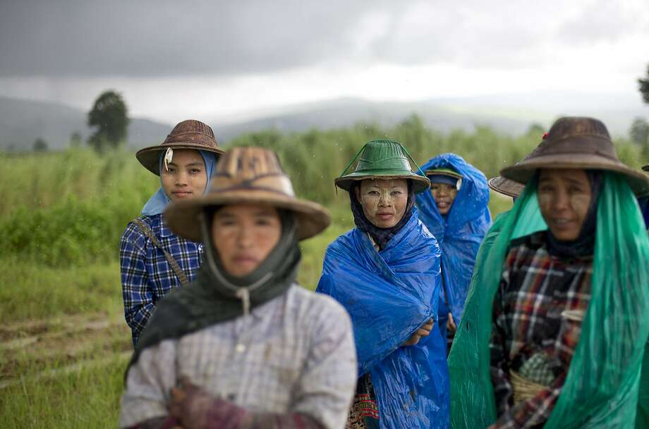 A group of Myanmar rice-field workers cover themselves in plastic sheets as monsoon rain pour down in Naypyidaw, Myanmar, Monday, Aug 11, 2014. Farmers grow rice with the help of the monsoon rain, which starts late May and ends in mid-October. (AP Photo/Gemunu Amarasinghe) Photo: Gemunu Amarasinghe, Associated Press