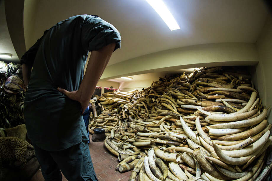 Basketball giant Yao Ming visited Africa to see first hand the plight of elephants and Rhinos killed every day for their ivory. Photo: Kristian Schmidt / Wild Aid