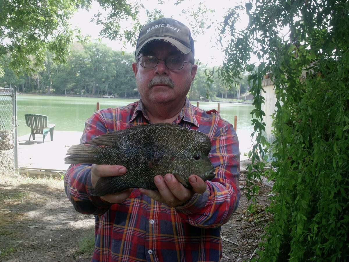 Charles Dewey, of Universal City, shows off his IGFA-certified world record Rio Grande cichlid, which weigh 2.02 pounds and measures 11.1 inches. Dewey caught the fish on Sept. 2, 2011