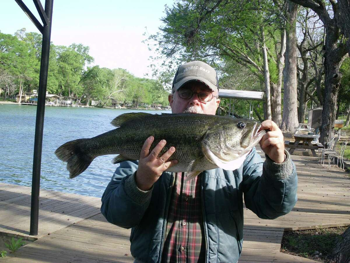 Charles Dewey, of Universal City, shows off his Guadalupe River record largemouth bass, which weighs 12 pounds and measures 26 inches and was caught in April 2014.