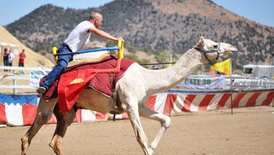 International Camel Races in Virginia City. Photo: Travel Nevada