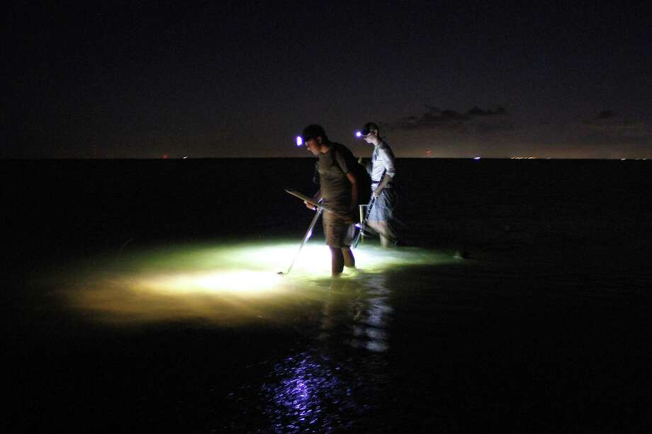 Wyatt Lang and Dylan Motley use portable, battery-powered, submersible lights to sweep the bottom of a sandy flat as they hunt flounder on a summer night. Nocturnal flounder gigging is a traditon along portion of the Texas coast, and can be very effective.  Because state fisheries crews conduct their angler harvest surveys during daylight hours and seldom encounter giggers,  fisheries manages have only rough estimates of participation in the recreational flounder gigging fishery and the number of flounder those angler take.  Thsoe numbers are of great importance to fisheries managers looking for ways to improve the state's struggling flounder population. Houston Chronicle photo by Shannon Tompkins Photo: Shannon Tompkins, Houston Chronicle / Houston Chronicle