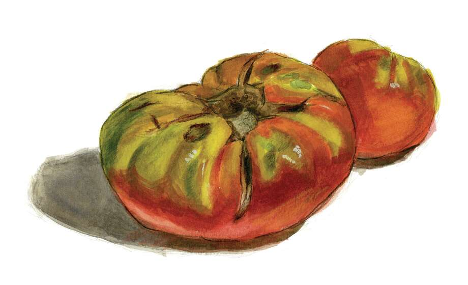 German Johnson: A large tomato favored for its flavor.  (Watercolor illustration by Tyswan Stewart / Times Union)