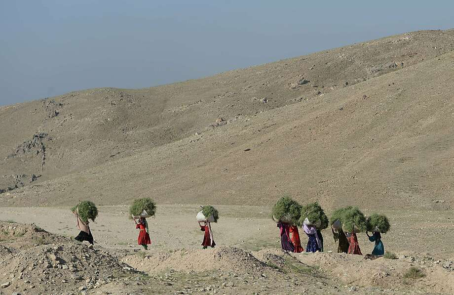 Bush convoy: Kochi women carry grass on their heads in a barren landscape along the Kabul-Bagram road, north of Kabul. Photo: Shah Marai, AFP/Getty Images