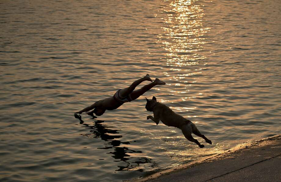 Wait for me! Aisha plays follow the leader with her owner on a lake in Bucharest. Photo: Vadim Ghirda, Associated Press
