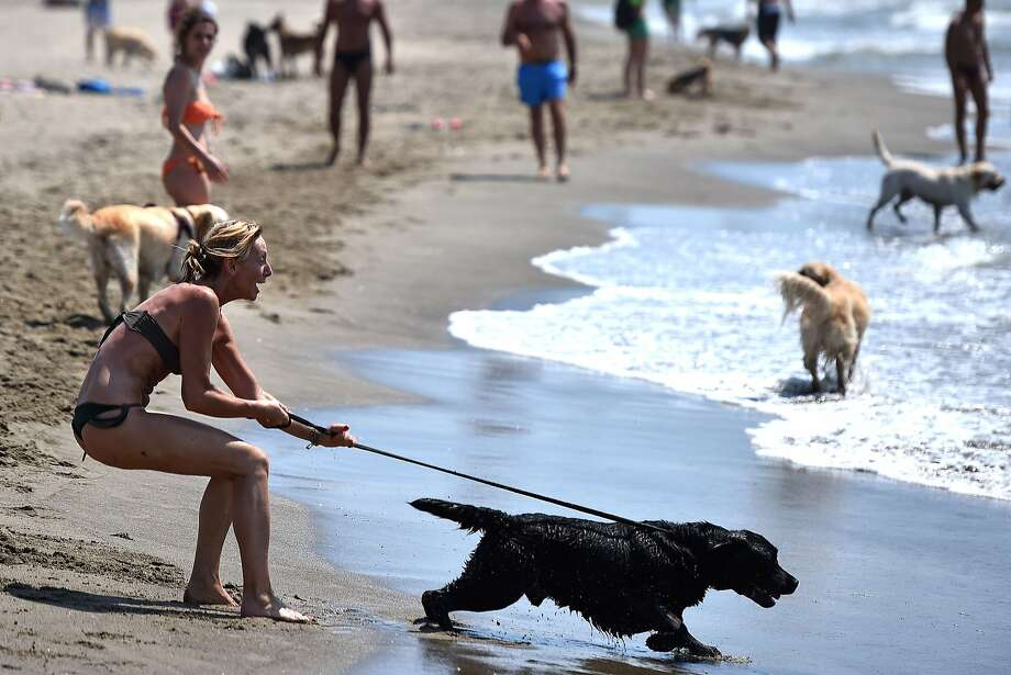 Rip tide? No, retriever: In Maccarese, Italy, near Rome, a woman is dragged out to 