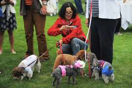 "A woman snaps a photo of a group of dressed up doggies on the Cypress Lawn of the Ritz-Carlton on July 31, 2014 in Half Moon Bay, CA. The Ritz is hosting a seres of ""yappy hours"" for dogs and their owners, where people are encouraged to bring their pets for cocktails."