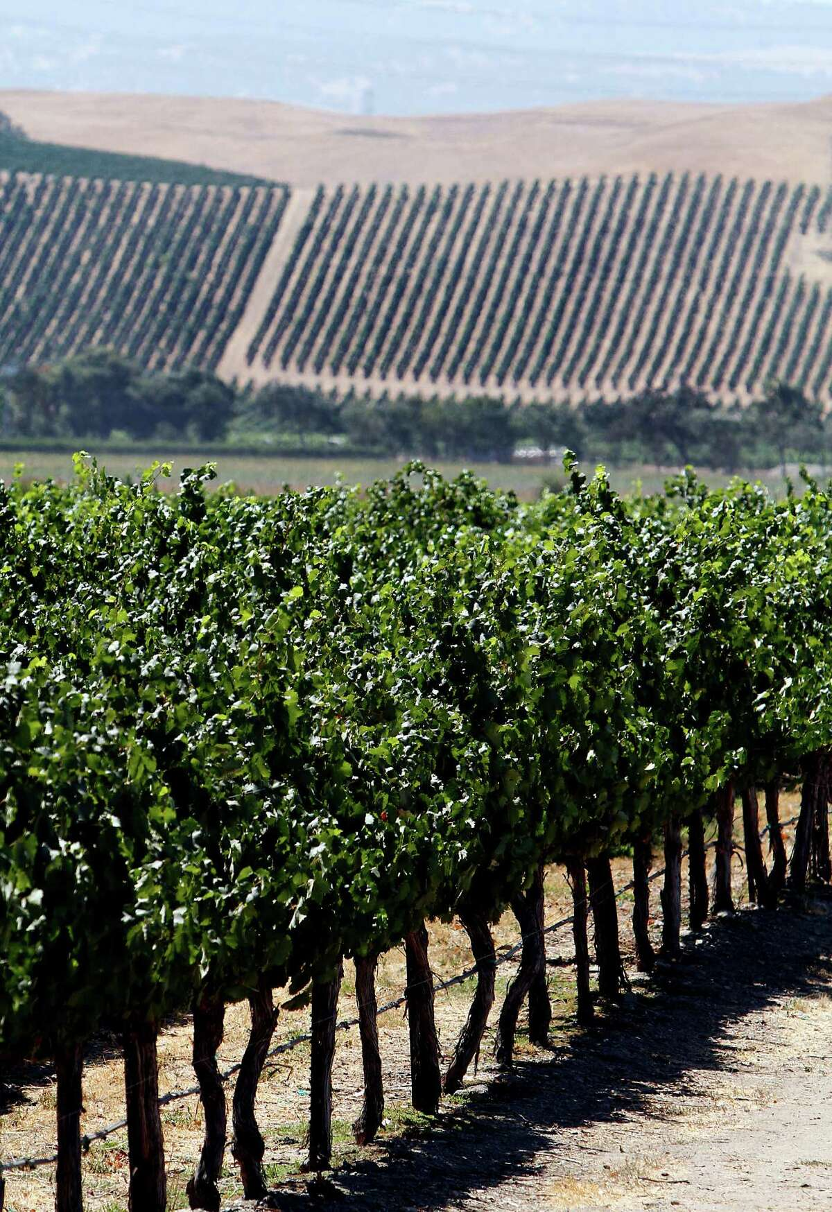 Vineyards in Livermore, where TerrAvion was launched in early 2013.