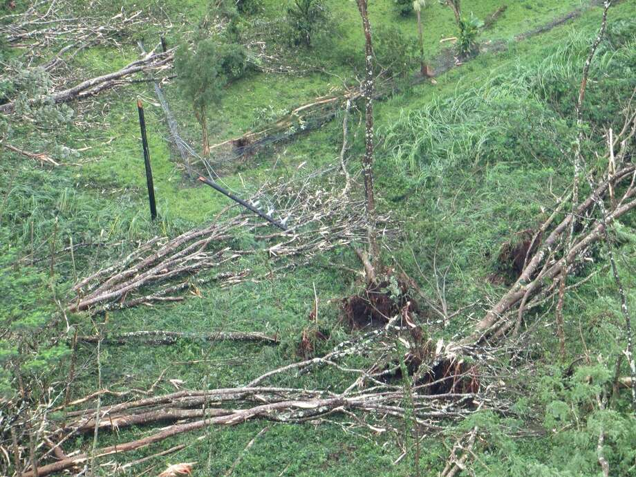 Tropical Storm Iselle cut a swath through the Big Island's heavily forested Puna District last week. Photo: HELCO