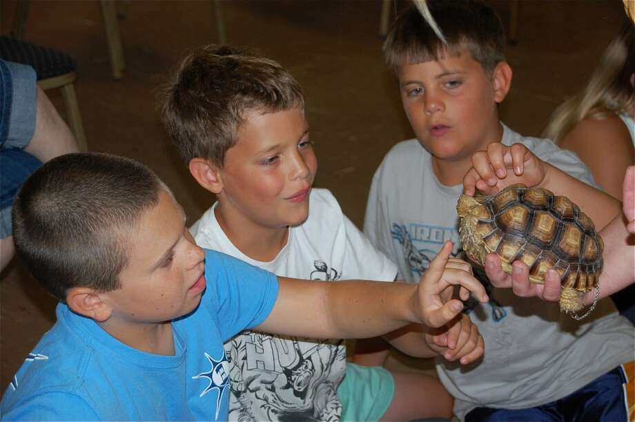 "Three curious boys, from left, Christopher Walko, Cole Laczkowski, and Grey Laczkowski wanted the feel of ""Sahara,"", a young Sulcata tortoise brought to them by Stamford based Animal Embassy. Photo by Carol Dianis."