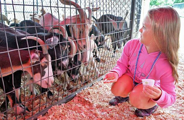Sadie Plant, 8, of Berne seems surprised by some hungry goats in the Circus Hollywood animal menagerie at the Altamont Fair Thursday August 14, 2014, in Altamont, NY.  (John Carl D'Annibale / Times Union) Photo: John Carl D'Annibale / 00028138A
