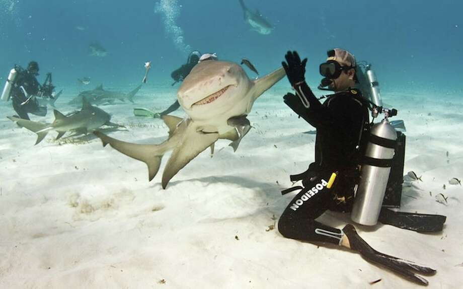 Woodlands attorney Paul Spielvogel is one of the world's best underwater photographers. This photo of the shark high-five made him a prominent name in the marine-loving community.Click to see other photos from his travels. Photo: Paul Spielvogel