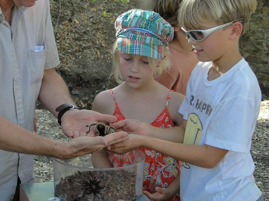 Children get a chance to hold a tarantula on Mount Diablo. The spiders look fearsome but are harmless. Photo: Mike Woodring