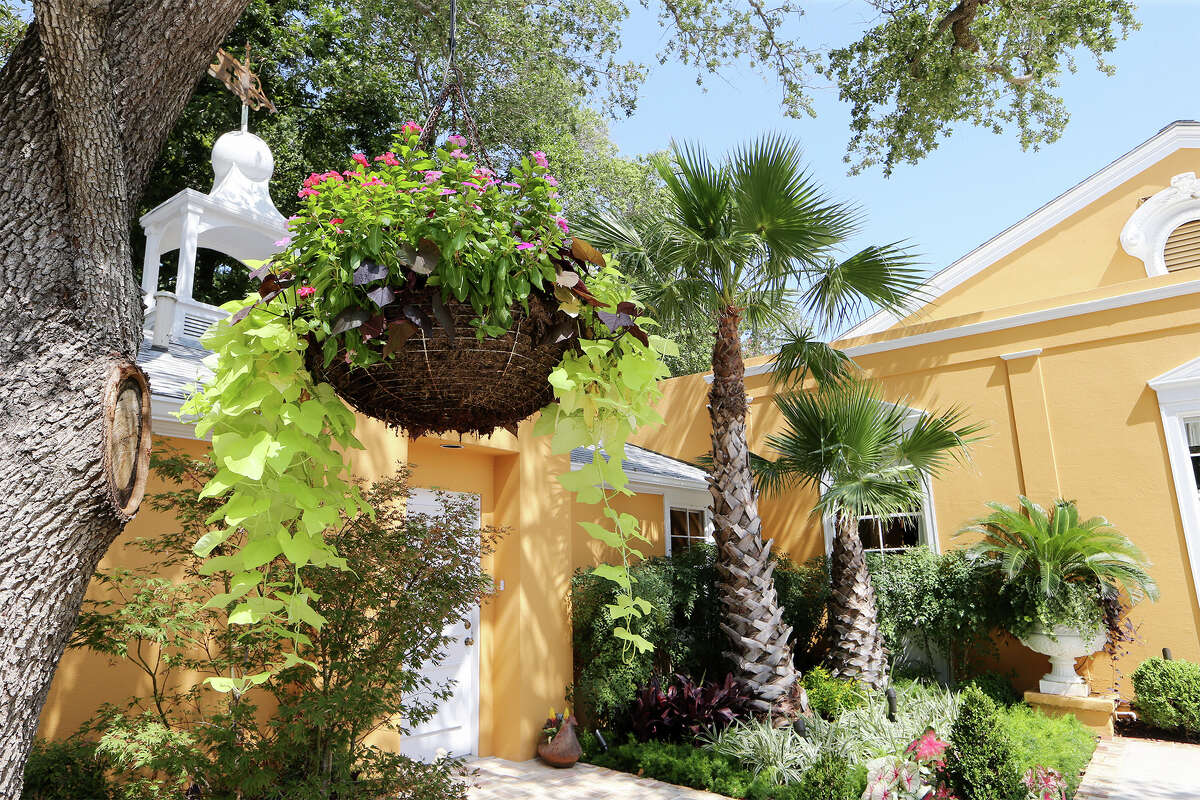 A large hanging and other plants in Iga Clark's landscape are watered with drip irrigation, making maintenance easy.