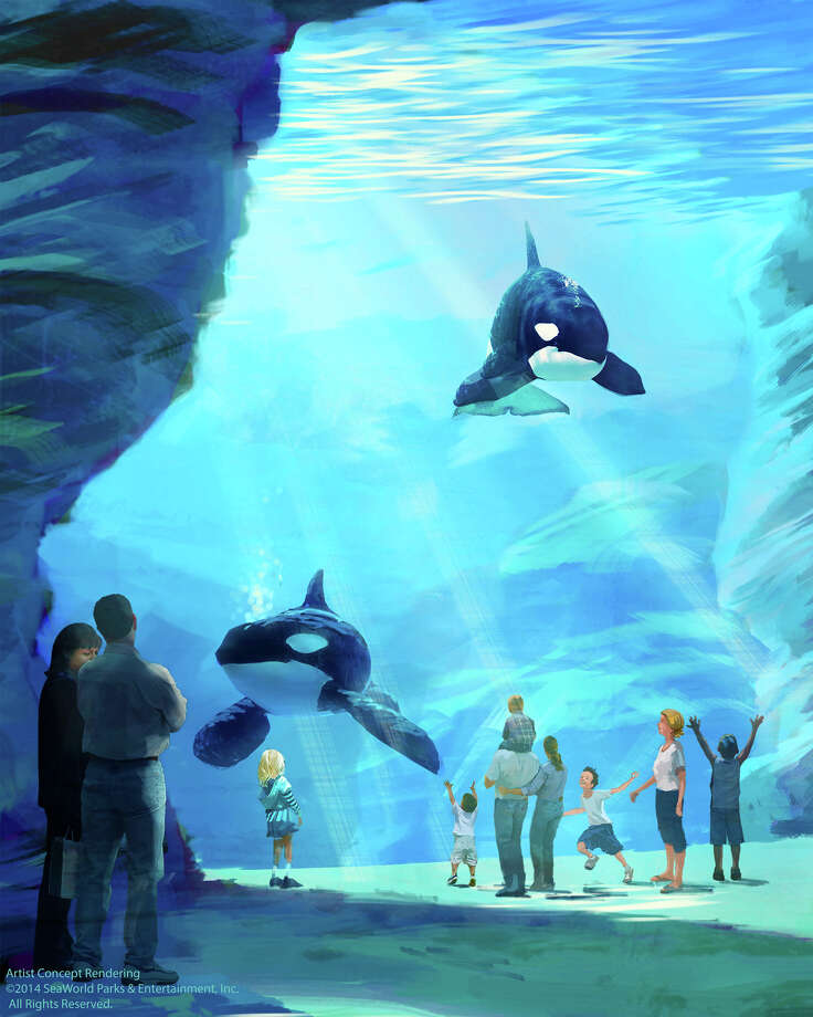 SeaWorld plans to build new killer whale, sea lion and dolphin habitats at its parks in San Antonio, San Diego and Orlando. The environments, the first of which will debut in 2018, will feature a maximum depth of 50 feet, surface area of nearly 1.5 acres and span more than 350 feet in length. Courtesy SeaWorld Entertainment Inc. Photo: Courtesy SeaWorld Entertainment