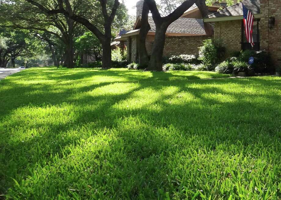 Americans' long-held notion of vast stretches of lawn are fading with drought, water restrictions and dwindling water supplies. Photo: Tracy Hobson Lehmann, Express-News
